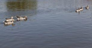 Το νερό είναι βρώμικο Στοκ Εικόνες