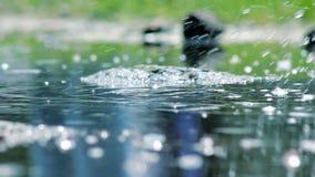 Το νερό καταβρέχει τις φυσαλίδες απόθεμα βίντεο