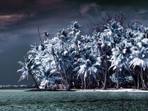 Το νησί με τους φοίνικες στη θάλασσα, μια υπέρυθρη φωτογραφία. Τροπικό τοπίο θάλασσας Στοκ Εικόνες