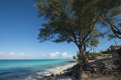 Το νησί των παραλιών Bimini στοκ φωτογραφία