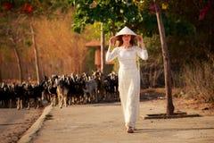 το ξανθό κορίτσι στο βιετναμέζικο φόρεμα πηγαίνει ενάντια στο κοπάδι αιγών Στοκ φωτογραφία με δικαίωμα ελεύθερης χρήσης