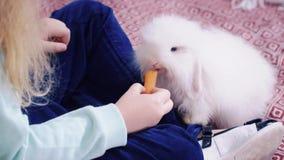 Το ξανθό μικρό κορίτσι ταΐζει στο άσπρο κουνέλι ένα καρότο απόθεμα βίντεο