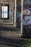 Το ξεχασμένο δέντρο Στοκ Εικόνες