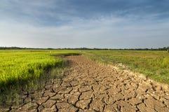 Το ξηρό έδαφος στον τομέα ορυζώνα Στοκ Φωτογραφία