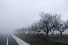 το ξηρό δέντρο ομίχλης εξαφ& στοκ φωτογραφίες