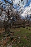Το ξηρό δέντρο στοκ φωτογραφίες με δικαίωμα ελεύθερης χρήσης