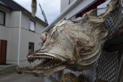 Το ξηρό κεφάλι Στοκ εικόνες με δικαίωμα ελεύθερης χρήσης