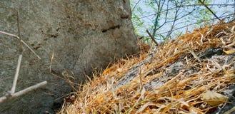 Το ξηρό μπαμπού ως υπόβαθρο, ξεραίνει τα φύλλα στο έδαφος με το φως του ήλιου στο δάσος Στοκ Εικόνα