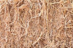 Το ξηρό υπόβαθρο σύστασης αχύρου με το διάστημα αντιγράφων προσθέτει το κείμενο Στοκ Φωτογραφίες