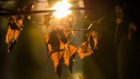 Το ξηρό φθινόπωρο αφήνει τη φλόγα ήλιων Στοκ εικόνα με δικαίωμα ελεύθερης χρήσης