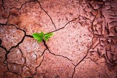 Το ξηρό χώμα είναι ρωγμή Στοκ εικόνα με δικαίωμα ελεύθερης χρήσης