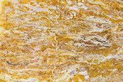 Το ξηρό quai ήχων καμπάνας, Dang Gui, γνωστό ως θηλυκό ginseng, ισίωσε ro Στοκ εικόνα με δικαίωμα ελεύθερης χρήσης