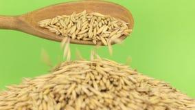 Το ξύλινο κουτάλι χύνει τη βρώμη σιταριών στο σωρό της βρώμης σε μια πράσινη οθόνη απόθεμα βίντεο