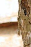 Το ξύλινο gecko Στοκ εικόνα με δικαίωμα ελεύθερης χρήσης