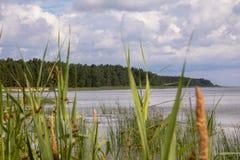 Το ξύλο στο νερό ενάντια στους καλάμους Στοκ εικόνες με δικαίωμα ελεύθερης χρήσης