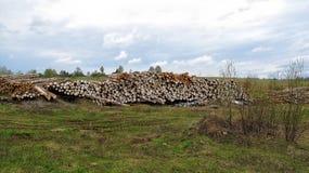Το ξύλο συνδέεται τον τομέα Στοκ Φωτογραφία