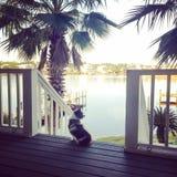 Το οκνηρό σκυλί θαυμάζει την άποψη Στοκ Εικόνες