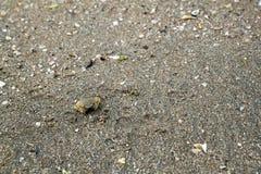 το οπίσθιο καβούρι το υπόβαθρο στην παραλία της Ταϊλάνδης έχει φυσικό Στοκ Φωτογραφίες