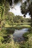 Το ουράνιο τόξο αναπηδά το κρατικό πάρκο Φλώριδα ΗΠΑ Στοκ φωτογραφία με δικαίωμα ελεύθερης χρήσης