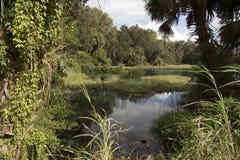 Το ουράνιο τόξο αναπηδά το κρατικό πάρκο Φλώριδα ΗΠΑ Στοκ εικόνες με δικαίωμα ελεύθερης χρήσης