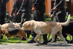 Το λουρί σκυλιών Στοκ Εικόνες