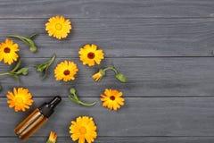 Το ουσιαστικό πετρέλαιο Aromatherapy με marigold ανθίζει στο μαύρο υπόβαθρο με το διάστημα αντιγράφων για το κείμενό σας Τοπ όψη Στοκ εικόνα με δικαίωμα ελεύθερης χρήσης