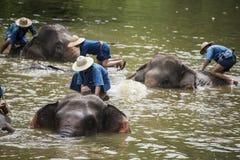 Το λουτρό Mahouts και καθαρίζει τους ελέφαντες στον ποταμό Στοκ Εικόνες
