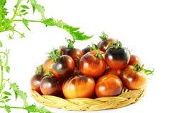 Το λουλάκι ντοματών αυξήθηκε μαύρη ντομάτα στοκ φωτογραφίες