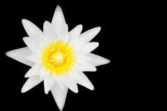 το λουλούδι έχει ι λευκό watercolors εικόνων λωτού ο ίδιος το χρωματισμένο Στοκ Εικόνα