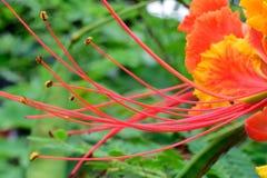 Το λουλούδι ήταν η ομορφιά Στοκ Εικόνες