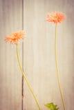 το λουλούδι ανασκόπησης ανθίζει τον τρύγο Στοκ Εικόνα