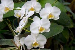 το λουλούδι ανθίζει orchid orchids & Στοκ φωτογραφία με δικαίωμα ελεύθερης χρήσης