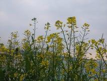 το λουλούδι ανθών ανασκόπησης ανθίζει το λευκό ουρανού Στοκ Φωτογραφίες