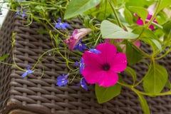 το λουλούδι απομόνωσε το λευκό Στοκ Φωτογραφίες
