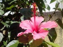 το λουλούδι απομόνωσε το λευκό Στοκ Εικόνες
