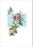Το λουλούδι εγκαταστάσεων αυξήθηκε Στοκ Φωτογραφίες