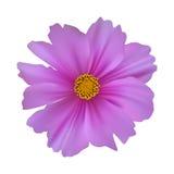 το λουλούδι κόσμου ανασκόπησης απομόνωσε το λευκό Στοκ Εικόνες