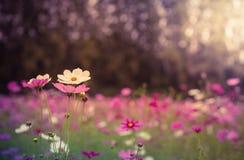 Το λουλούδι κόσμου Στοκ εικόνα με δικαίωμα ελεύθερης χρήσης