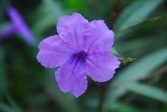 Το λουλούδι μέσα Στοκ Εικόνες