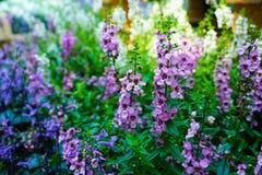το λουλούδι με ξεχνά όχι Στοκ Εικόνες