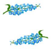 το λουλούδι με ξεχνά όχι διανυσματική απεικόνιση