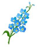 το λουλούδι με ξεχνά όχι ελεύθερη απεικόνιση δικαιώματος