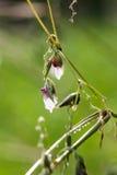 Το λουλούδι με την πτώση νερού Στοκ εικόνες με δικαίωμα ελεύθερης χρήσης