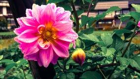 Το λουλούδι σε Shirakawa πηγαίνει χωριό στην Ιαπωνία Στοκ Φωτογραφίες