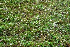 Το λουλούδι στο έδαφος Στοκ εικόνες με δικαίωμα ελεύθερης χρήσης