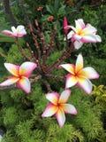 Το λουλούδι της Ταϊλάνδης μέσα στο ύφος θερέτρου Στοκ Εικόνα
