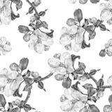 Το λουλούδι της Apple, watercolor, άνευ ραφής, μονοχρωματικός Στοκ Φωτογραφίες