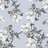 Το λουλούδι της Apple, watercolor, άνευ ραφής, μονοχρωματικός Στοκ φωτογραφία με δικαίωμα ελεύθερης χρήσης