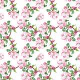 Το λουλούδι της Apple, watercolor, άνευ ραφής Στοκ εικόνα με δικαίωμα ελεύθερης χρήσης