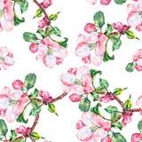 Το λουλούδι της Apple, watercolor, άνευ ραφής Στοκ φωτογραφία με δικαίωμα ελεύθερης χρήσης